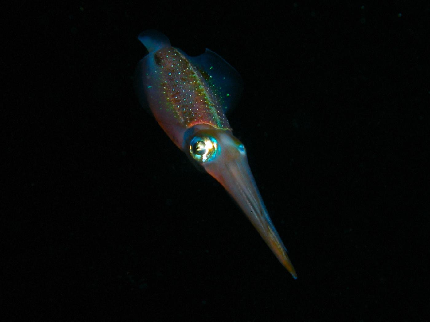 Spanish Squid is on-line!